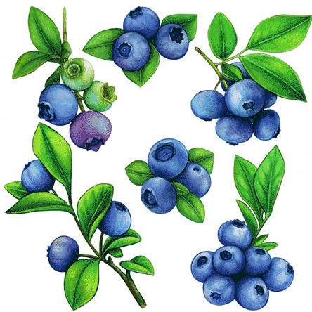 The rise of blueberries